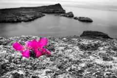 Blommor (001)